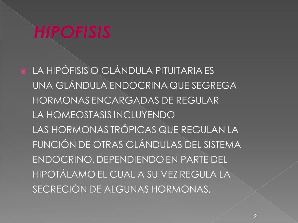 LA HIPÓFISIS O GLÁNDULA PITUITARIA ES UNA GLÁNDULA ENDOCRINA QUE SEGREGA HORMONAS ENCARGADAS DE REGULAR LA HOMEOSTASIS INCLUYENDO LAS HORMONAS TRÓPICA