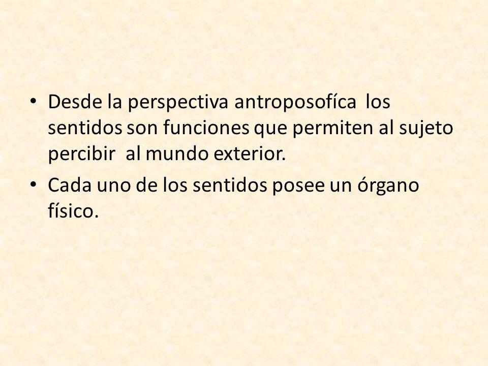 Desde la perspectiva antroposofíca los sentidos son funciones que permiten al sujeto percibir al mundo exterior. Cada uno de los sentidos posee un órg