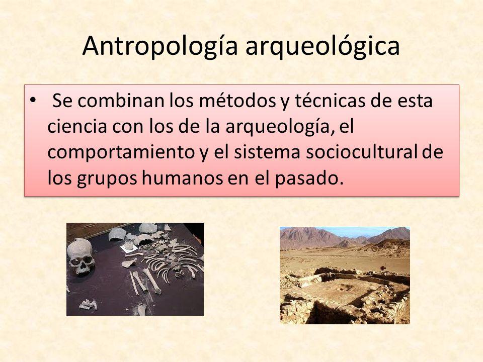 Antropología arqueológica Se combinan los métodos y técnicas de esta ciencia con los de la arqueología, el comportamiento y el sistema sociocultural d