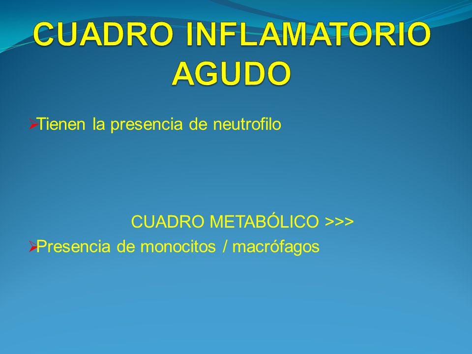 Tienen la presencia de neutrofilo CUADRO METABÓLICO >>> Presencia de monocitos / macrófagos