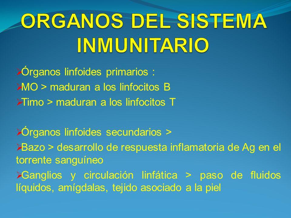 Órganos linfoides primarios : MO > maduran a los linfocitos B Timo > maduran a los linfocitos T Órganos linfoides secundarios > Bazo > desarrollo de r