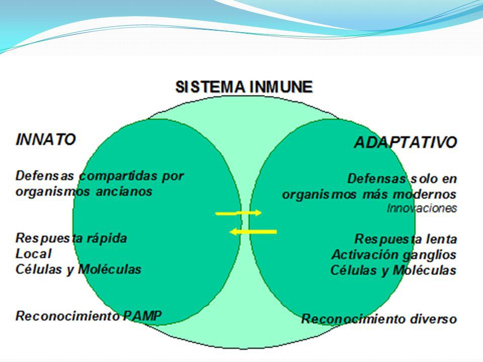 Activación de linfocitos B Respuesta primaria y secundaria RESPUESTA INMUNE ALTERADA Inmunodeficiencias > defectos de uno o varios componentes del sistema inmune o alteración a su respuesta
