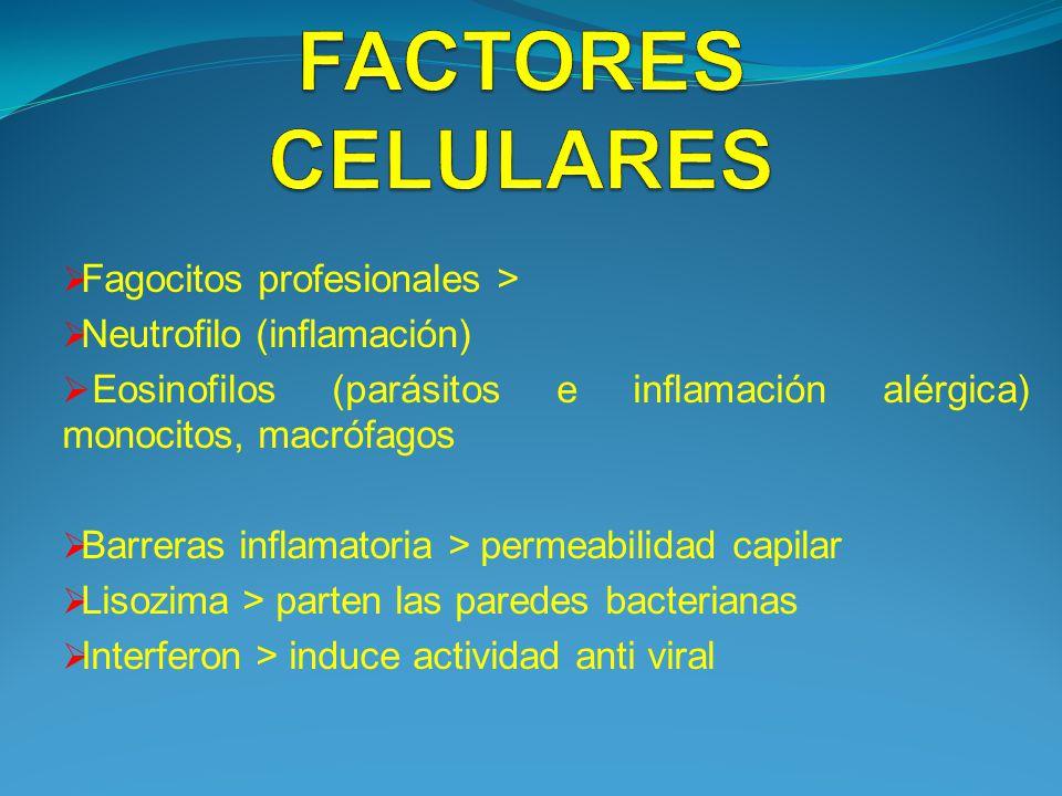 Fagocitos profesionales > Neutrofilo (inflamación) Eosinofilos (parásitos e inflamación alérgica) monocitos, macrófagos Barreras inflamatoria > permea