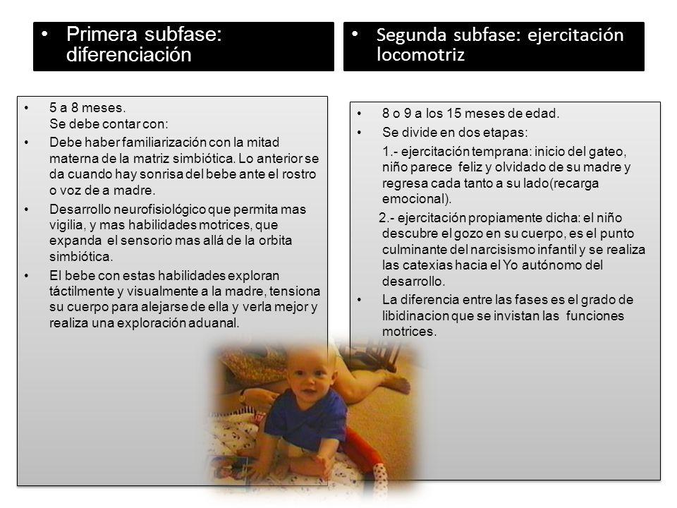 Primera subfase: diferenciación Segunda subfase: ejercitación locomotriz