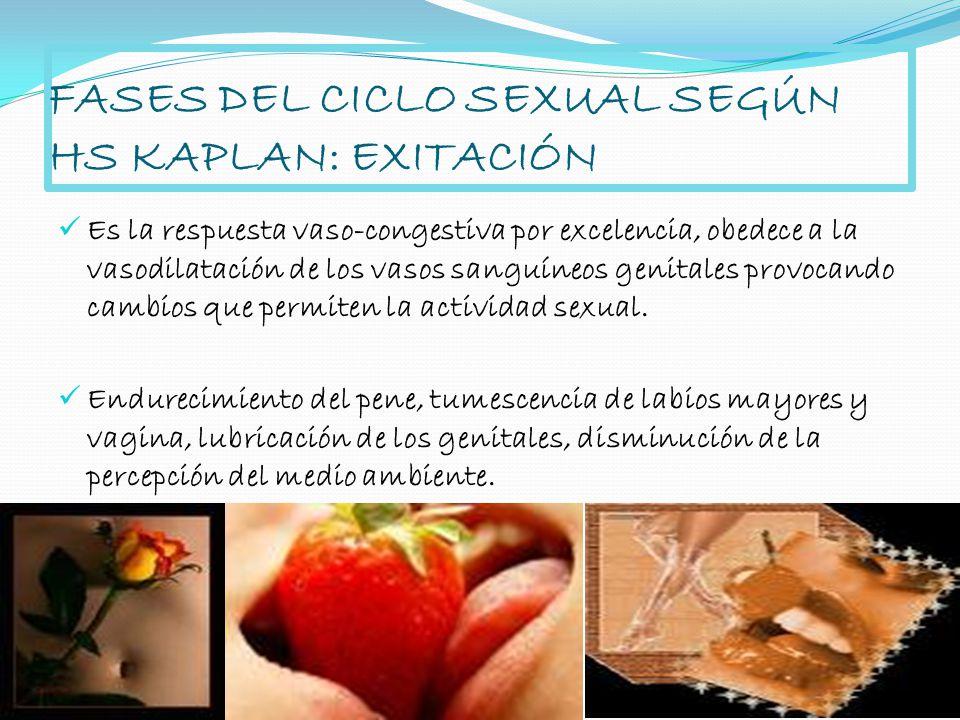 FASES DEL CICLO SEXUAL SEGÚN HS KAPLAN: EXITACIÓN Es la respuesta vaso-congestiva por excelencia, obedece a la vasodilatación de los vasos sanguíneos