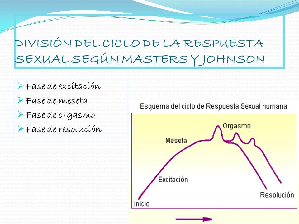 DIVISIÓN DEL CICLO DE LA RESPUESTA SEXUAL SEGÚN MASTERS Y JOHNSON Fase de excitación Fase de meseta Fase de orgasmo Fase de resolución