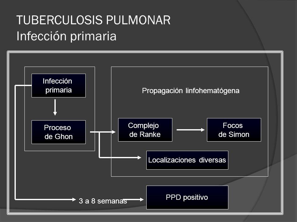 TUBERCULOSIS PULMONAR Infección primaria PPD positivo Infección primaria Proceso de Ghon Focos de Simon Complejo de Ranke 3 a 8 semanas Localizaciones diversas Propagación linfohematógena