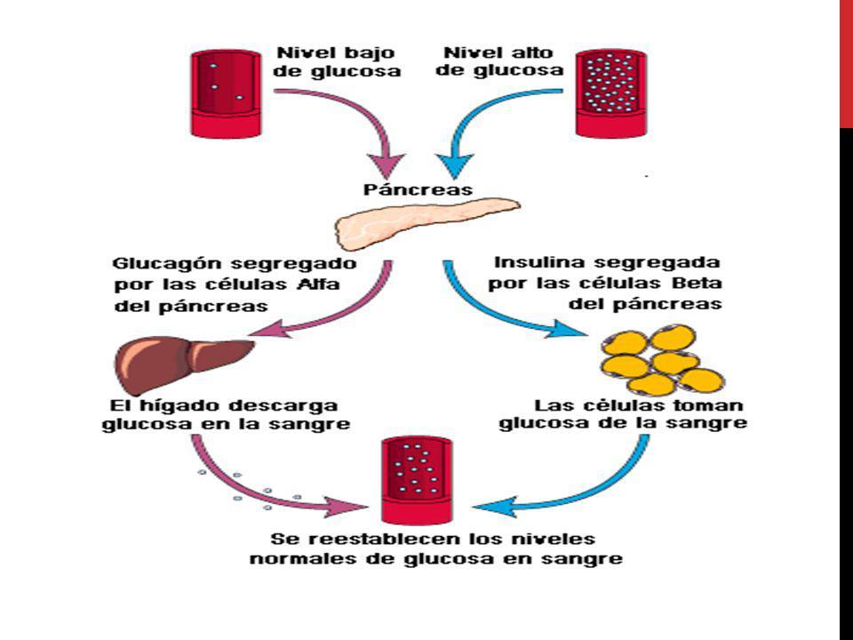 OBJETIVOS DEL TRATAMIENTO Resistencia a la insulina Secreción de insulina Efecto incretina