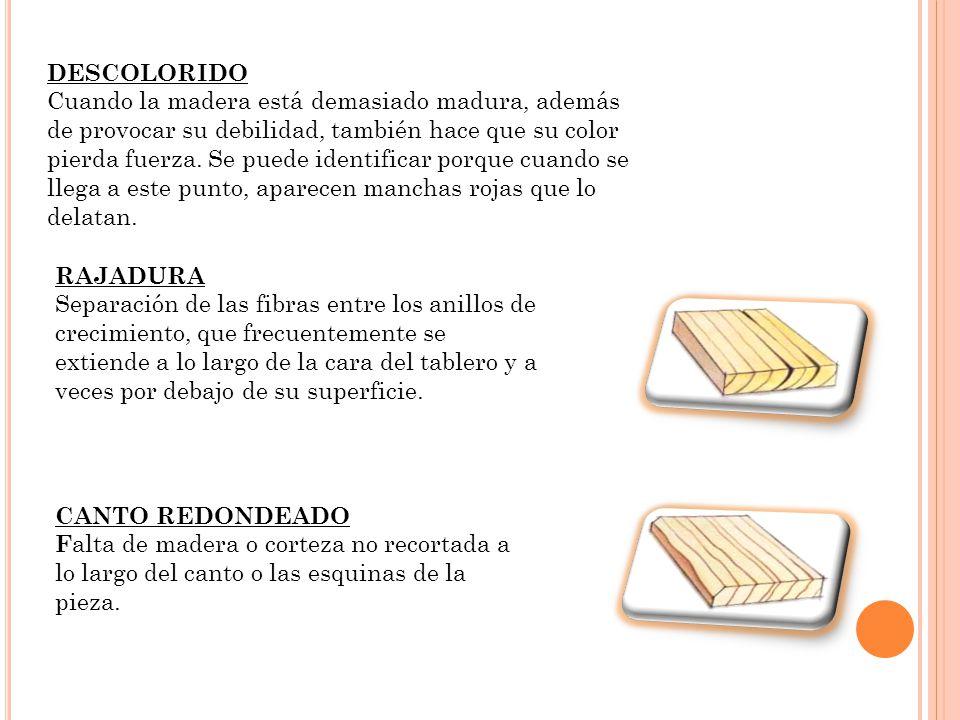 DESCOLORIDO Cuando la madera está demasiado madura, además de provocar su debilidad, también hace que su color pierda fuerza.