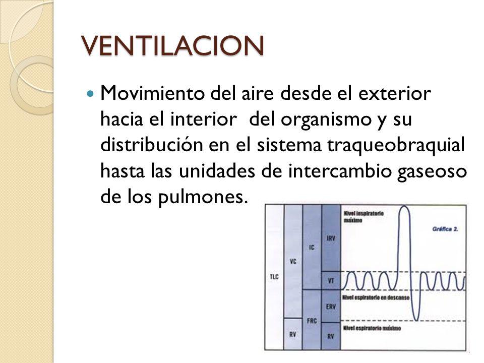 VENTILACION Movimiento del aire desde el exterior hacia el interior del organismo y su distribución en el sistema traqueobraquial hasta las unidades d