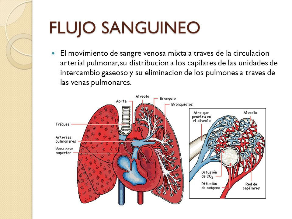 Flujo sanguíneo pulmonar La función principal de la circulación pulmonar es la entrega de sangre en forma de una delgada película a las unidades de intercambio gaseoso, para que pueda realizarse la captación de O2 y la eliminación de CO2.