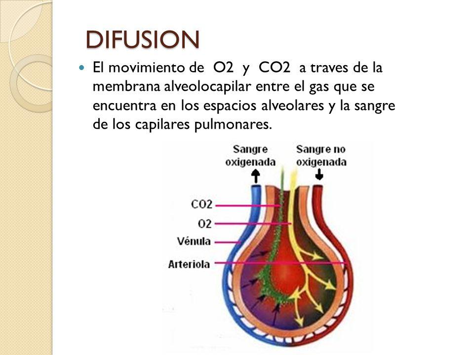 DIFUSION El movimiento de O2 y CO2 a traves de la membrana alveolocapilar entre el gas que se encuentra en los espacios alveolares y la sangre de los