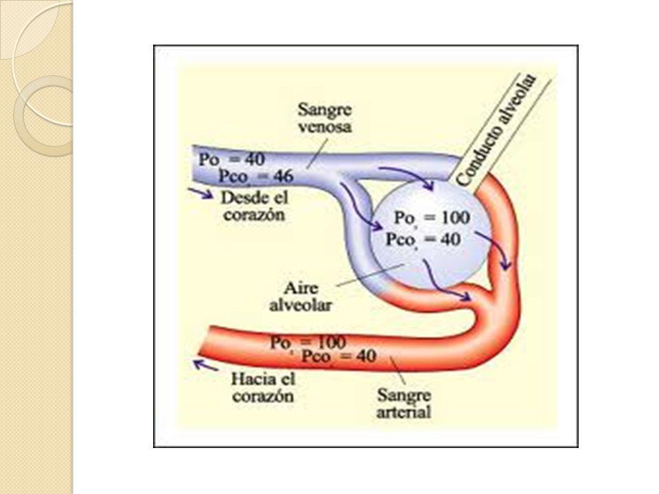 Transporte de oxigeno Las demandas de O2 de una existencia física y metabólica rigurosa se satisfacen por las respuestas integradas de los tres componentes del sistema de transporte de oxigeno.