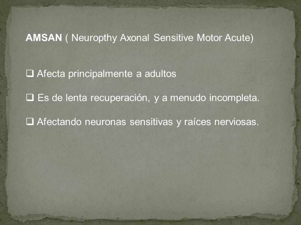 AMSAN ( Neuropthy Axonal Sensitive Motor Acute) Afecta principalmente a adultos Es de lenta recuperación, y a menudo incompleta. Afectando neuronas se