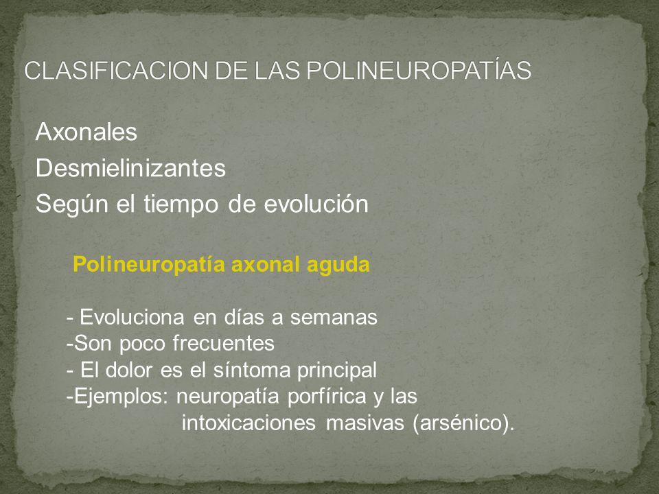 Axonales Desmielinizantes Según el tiempo de evolución Polineuropatía axonal aguda - Evoluciona en días a semanas -Son poco frecuentes - El dolor es e
