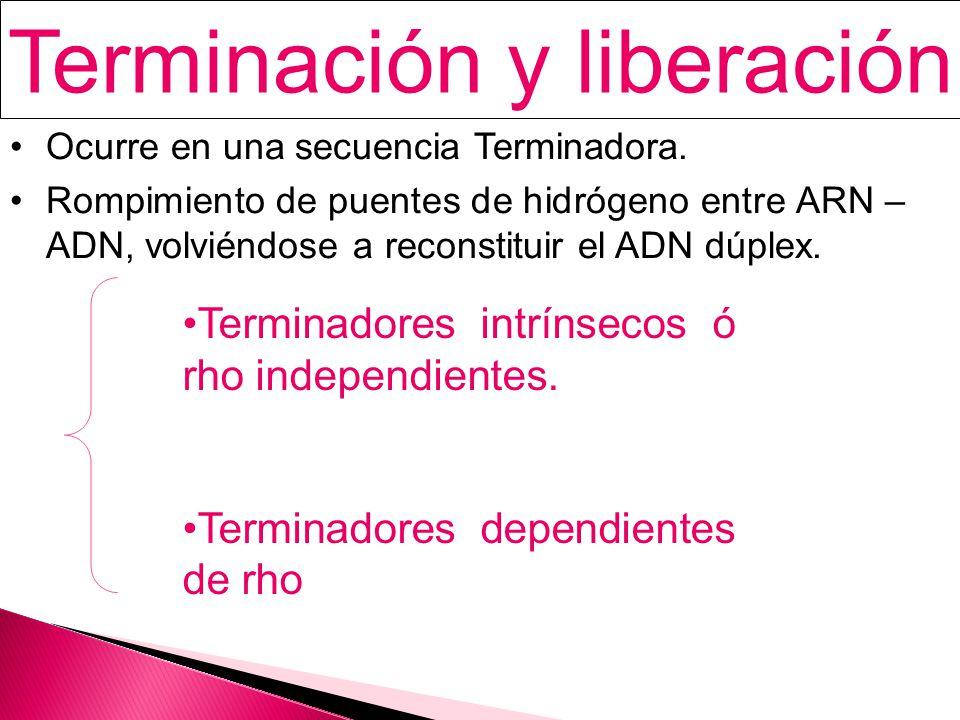 Terminación y liberación Ocurre en una secuencia Terminadora.