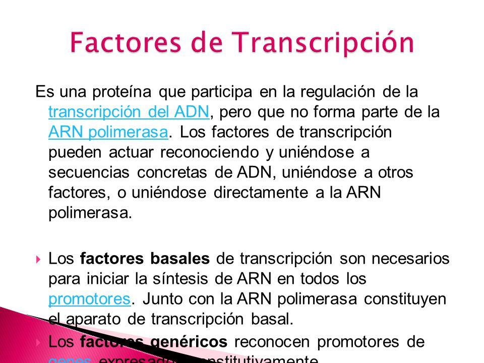 Es una proteína que participa en la regulación de la transcripción del ADN, pero que no forma parte de la ARN polimerasa.
