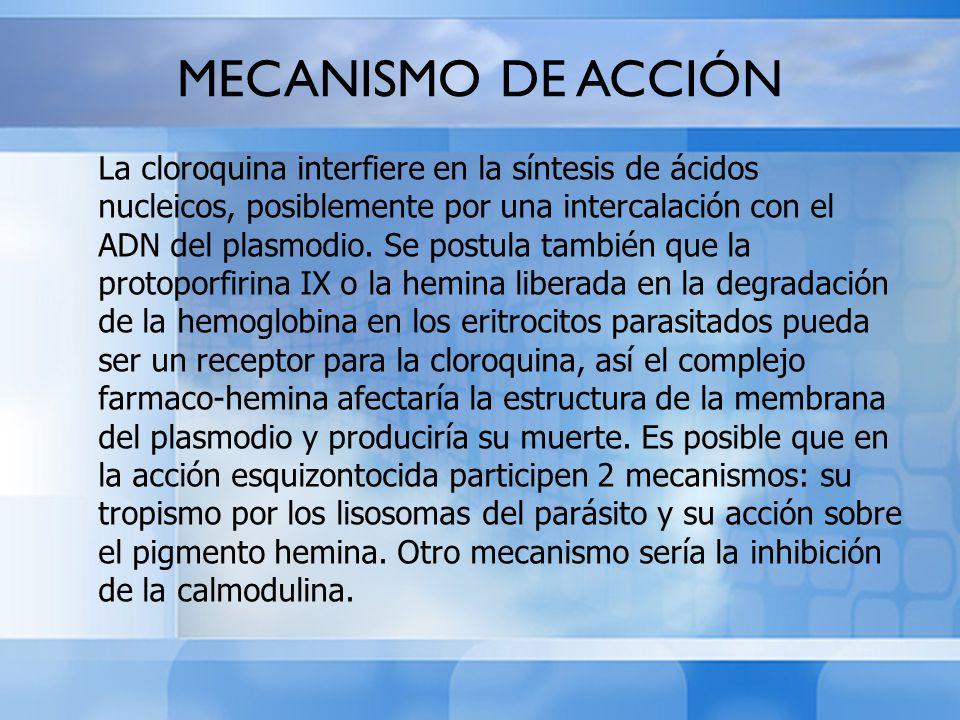 MECANISMO DE ACCIÓN La cloroquina interfiere en la síntesis de ácidos nucleicos, posiblemente por una intercalación con el ADN del plasmodio. Se postu