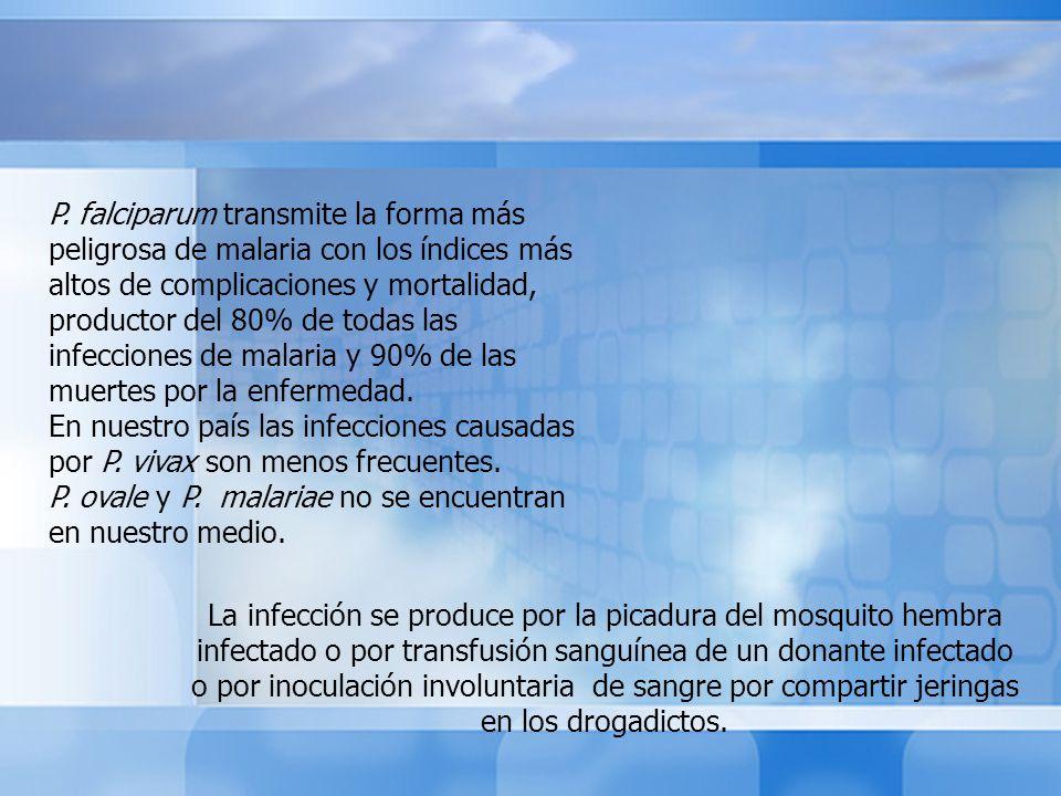 La infección se produce por la picadura del mosquito hembra infectado o por transfusión sanguínea de un donante infectado o por inoculación involuntar