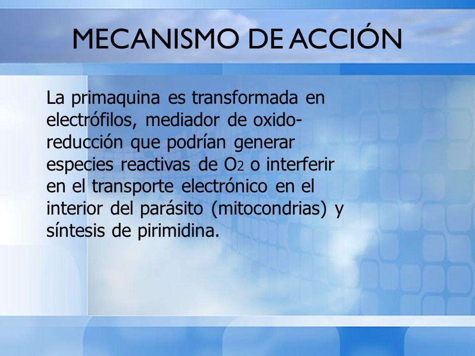 MECANISMO DE ACCIÓN La primaquina es transformada en electrófilos, mediador de oxido- reducción que podrían generar especies reactivas de O 2 o interf