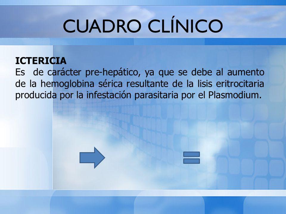 CUADRO CLÍNICO ICTERICIA Es de carácter pre-hepático, ya que se debe al aumento de la hemoglobina sérica resultante de la lisis eritrocitaria producid