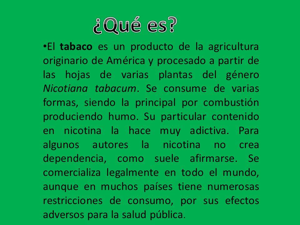 El tabaco es un producto de la agricultura originario de América y procesado a partir de las hojas de varias plantas del género Nicotiana tabacum. Se