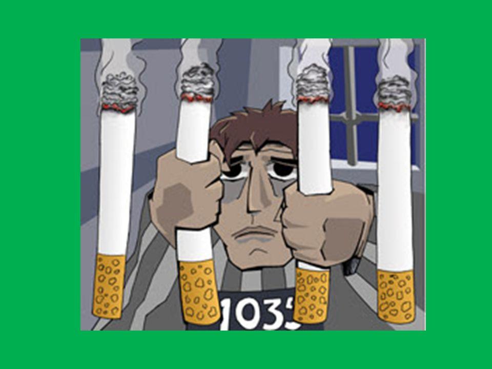 Los expertos en vegetales han determinado que el centro del origen del tabaco se sitúa en la zona andina entre Perú y Ecuador.
