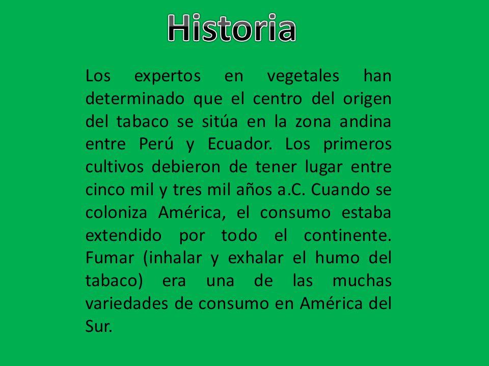 Los expertos en vegetales han determinado que el centro del origen del tabaco se sitúa en la zona andina entre Perú y Ecuador. Los primeros cultivos d