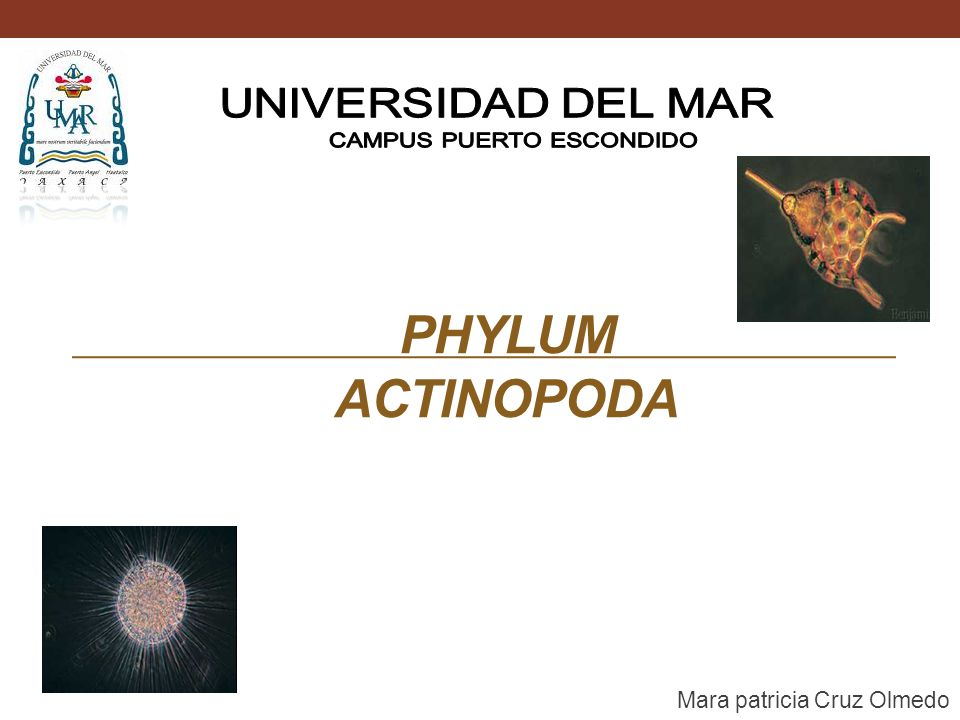 PHYLUM ACTINOPODA Mara patricia Cruz Olmedo