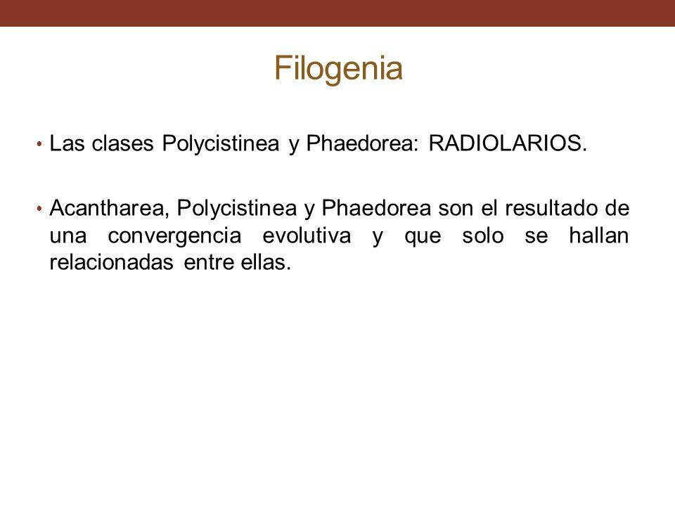 Filogenia Las clases Polycistinea y Phaedorea: RADIOLARIOS.