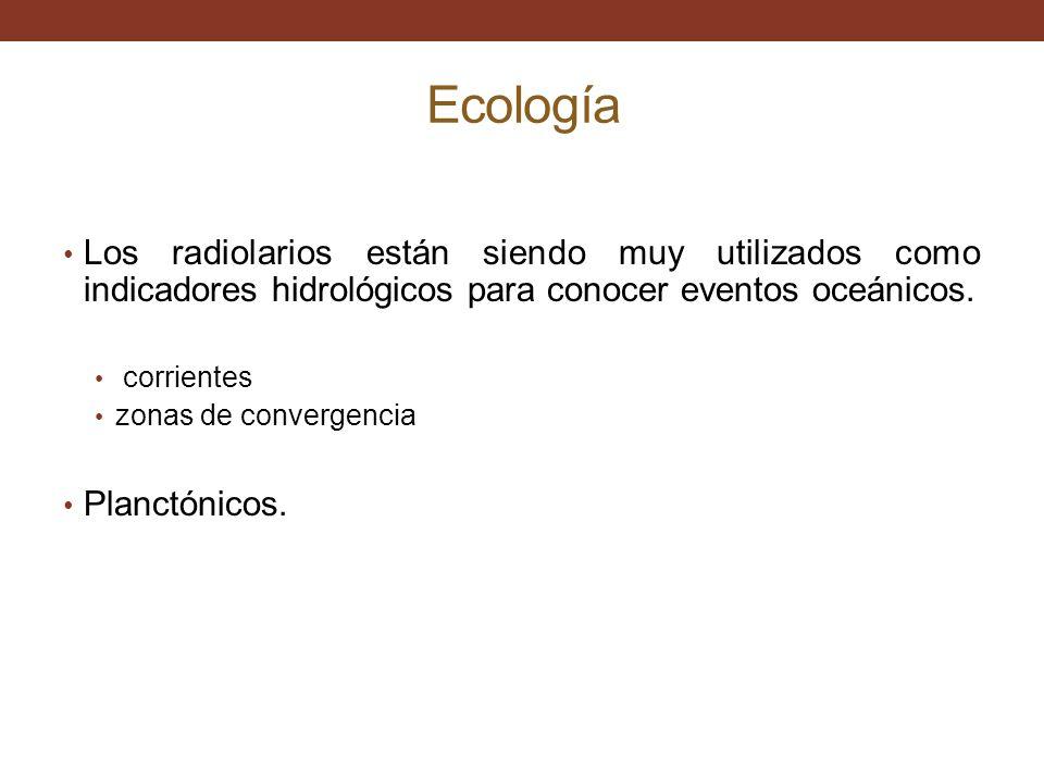 Ecología Los radiolarios están siendo muy utilizados como indicadores hidrológicos para conocer eventos oceánicos.