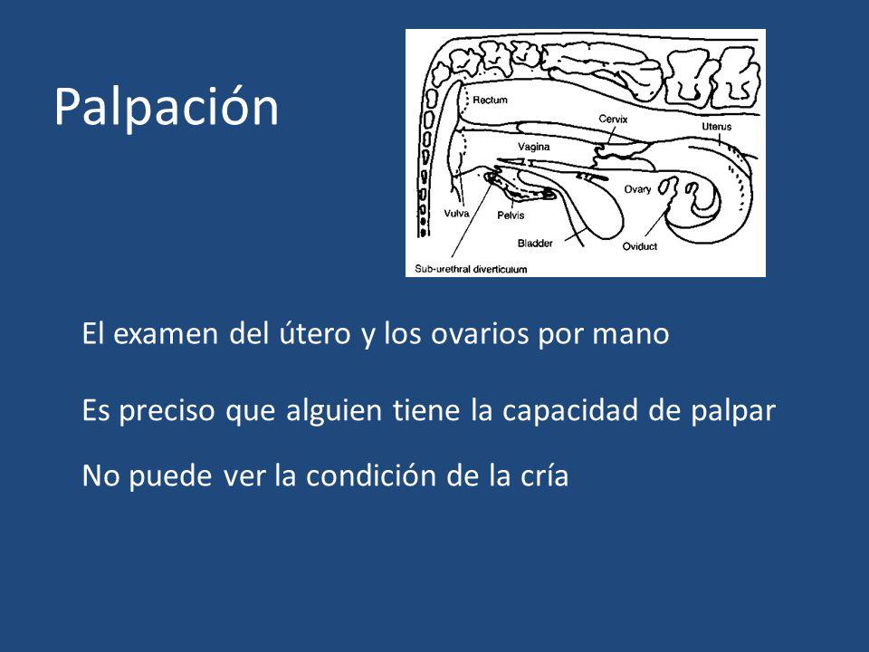 Palpación El examen del útero y los ovarios por mano Es preciso que alguien tiene la capacidad de palpar No puede ver la condición de la cría