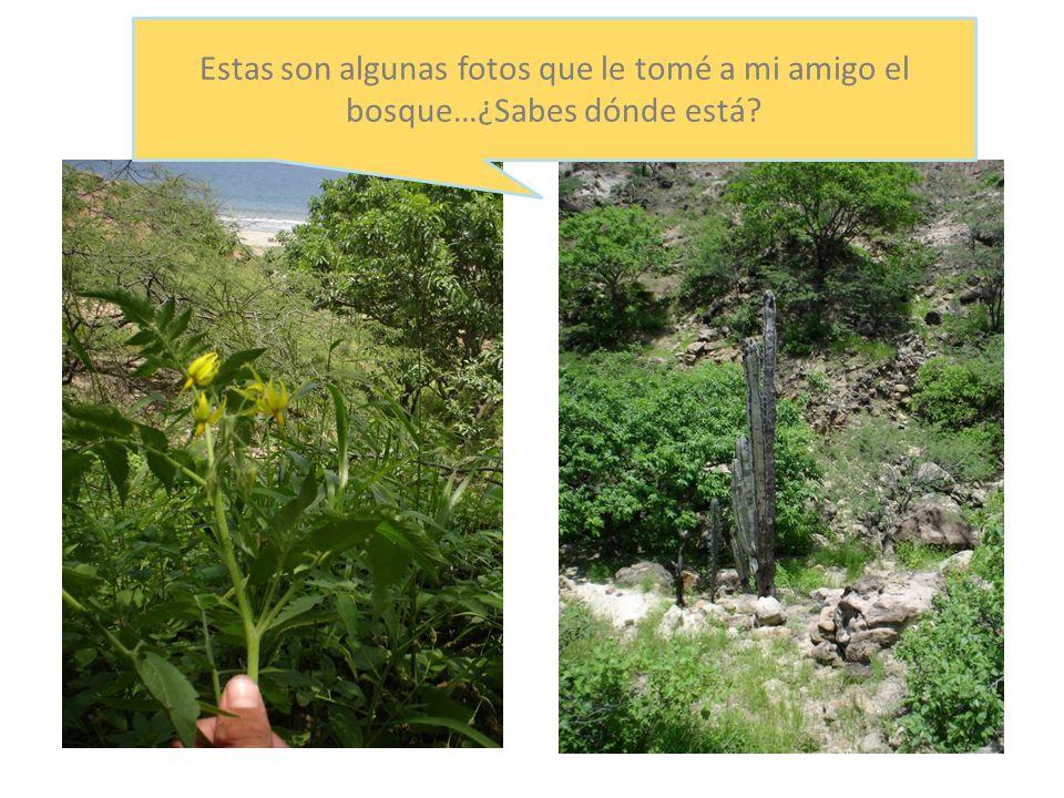 Las Plantas en el Bosque Seco Estas son algunas fotos que le tomé a mi amigo el bosque…¿Sabes dónde está?