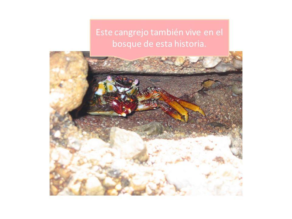 Este cangrejo también vive en el bosque de esta historia.