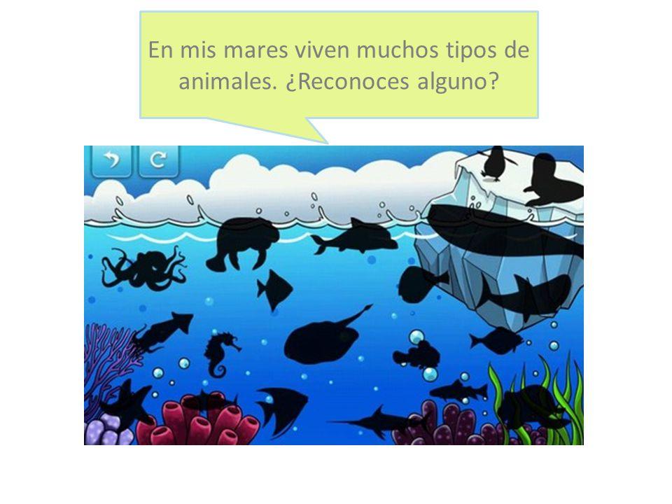 En mis mares viven muchos tipos de animales. ¿Reconoces alguno?