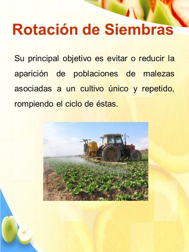 Rotación de Siembras Su principal objetivo es evitar o reducir la aparición de poblaciones de malezas asociadas a un cultivo único y repetido, rompien