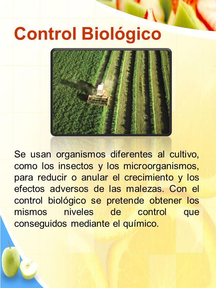 Control Químico Es la utilización de herbicidas inorgánicos, éstos se clasifican según su aplicación en: Herbicidas de presiembra temprana Herbicidas de presiembra (o pretransplante) Herbicidas de preemergencia Herbicidas de aplicaci ó n foliar o de postemergencia.
