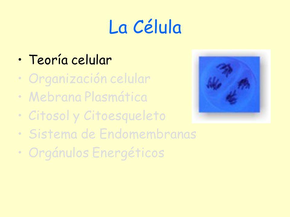 Teoría Celular Todos los seres vivos están formados por células La célula es la unidad morfológica y funcional de los seres vivos Toda célula procede de otra célula