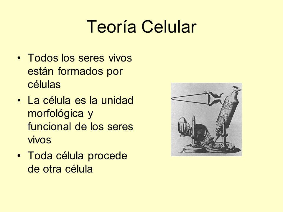Teoría Celular Todos los seres vivos están formados por células La célula es la unidad morfológica y funcional de los seres vivos Toda célula procede
