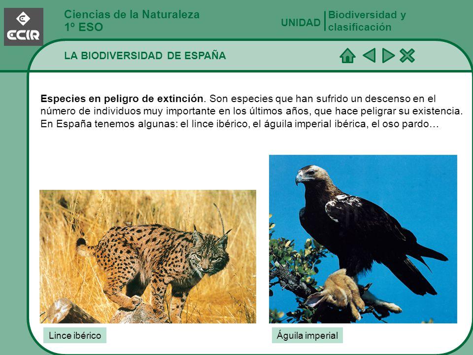 Ciencias de la Naturaleza 1º ESO LA BIODIVERSIDAD DE ESPAÑA Biodiversidad y clasificación UNIDAD Especies en peligro de extinción. Son especies que ha