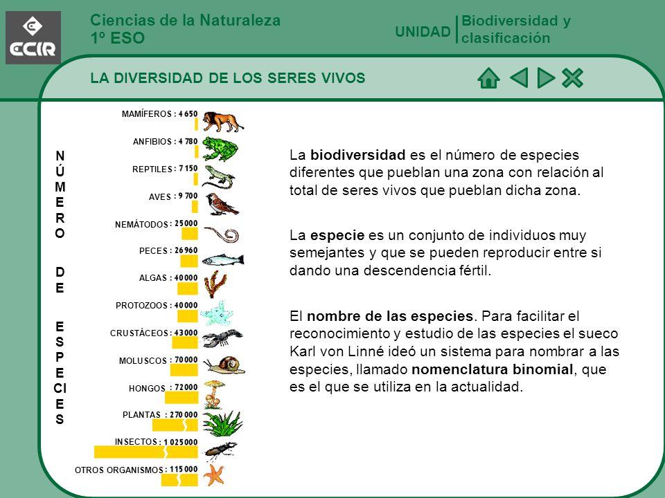 Ciencias de la Naturaleza 1º ESO LA DIVERSIDAD DE LOS SERES VIVOS Biodiversidad y clasificación UNIDAD La biodiversidad es el número de especies difer