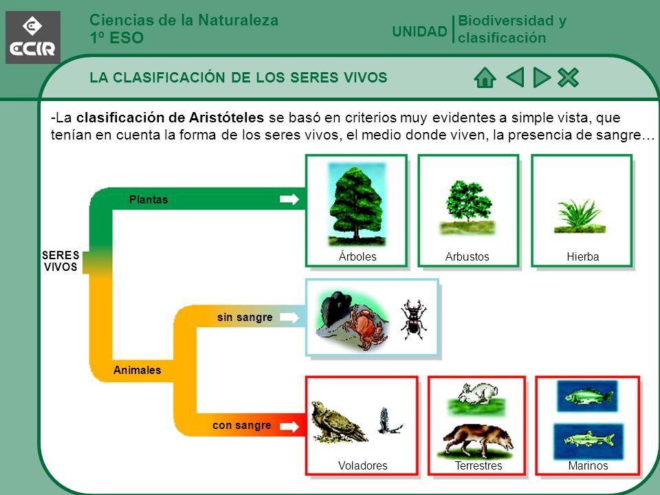 Ciencias de la Naturaleza 1º ESO LA CLASIFICACIÓN DE LOS SERES VIVOS Biodiversidad y clasificación UNIDAD -La clasificación de Aristóteles se basó en