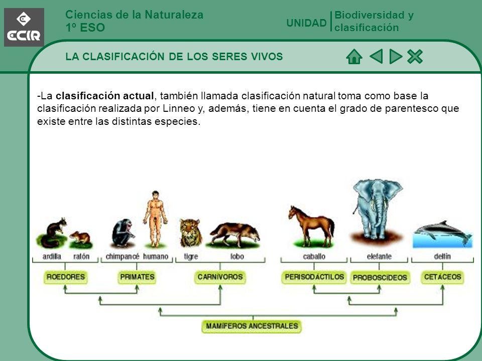 Ciencias de la Naturaleza 1º ESO LA CLASIFICACIÓN DE LOS SERES VIVOS Biodiversidad y clasificación UNIDAD -La clasificación actual, también llamada cl