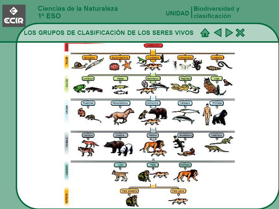 Ciencias de la Naturaleza 1º ESO LOS GRUPOS DE CLASIFICACIÓN DE LOS SERES VIVOS Biodiversidad y clasificación UNIDAD GÉNERO ESPECIE Cánidos Roedores M
