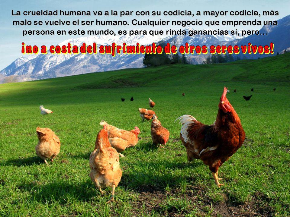 Cualquier criatura del reino animal debe vivir en su habitat y si esto no es posible, hay que procurarle un ambiente parecido, en donde pueda desenvol