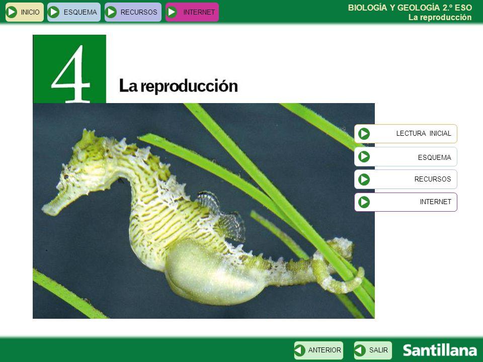 BIOLOGÍA Y GEOLOGÍA 2.º ESO La reproducción INICIOESQUEMARECURSOSINTERNET LECTURA INICIAL ESQUEMA RECURSOS INTERNETSALIRANTERIOR