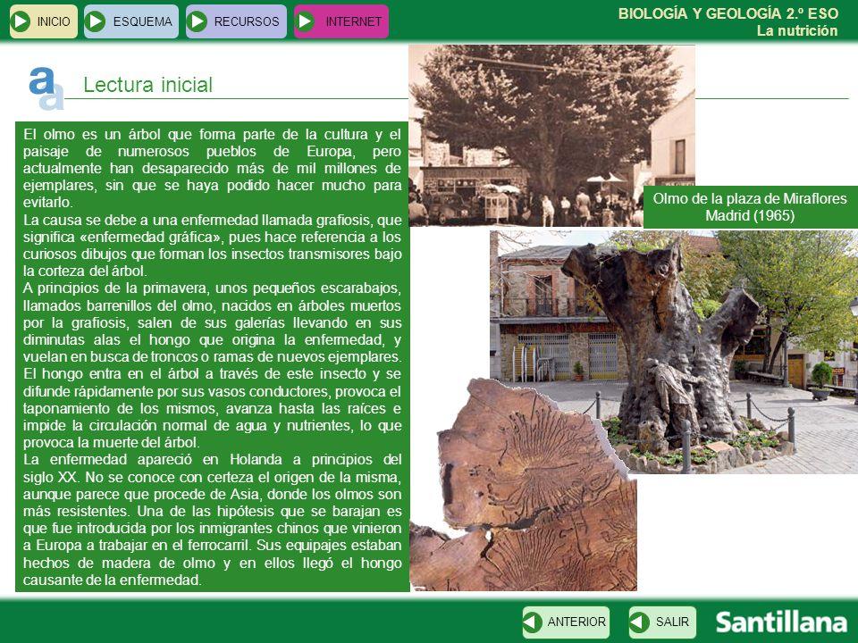 BIOLOGÍA Y GEOLOGÍA 2.º ESO La nutrición INICIOESQUEMARECURSOSINTERNET Lectura inicial El olmo es un árbol que forma parte de la cultura y el paisaje