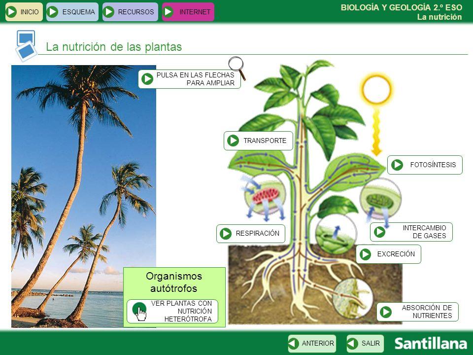 BIOLOGÍA Y GEOLOGÍA 2.º ESO La nutrición INTERCAMBIO DE GASES INICIOESQUEMARECURSOSINTERNET La nutrición de las plantas SALIRANTERIOR Organismos autót