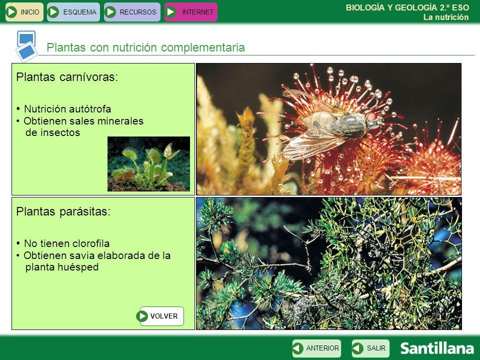 BIOLOGÍA Y GEOLOGÍA 2.º ESO La nutrición INICIOESQUEMARECURSOSINTERNET Plantas con nutrición complementaria SALIRANTERIOR Plantas carnívoras: Nutrició