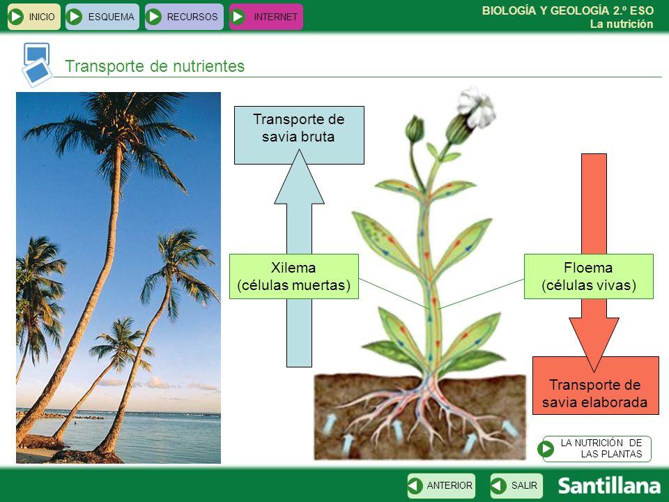 BIOLOGÍA Y GEOLOGÍA 2.º ESO La nutrición Transporte de savia elaborada Transporte de savia bruta INICIOESQUEMARECURSOSINTERNET Transporte de nutriente